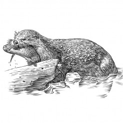 engraving animals otter eating fish