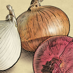 pen and ink food beverage onions