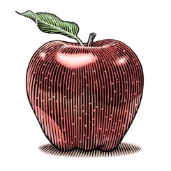 line art apple