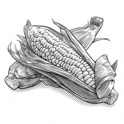 crosshatch food beverage corn