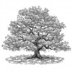 engraving motley tree