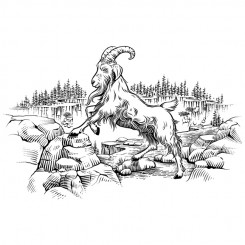 line art animals mountain goat