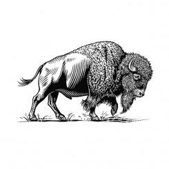 scratchboard animals bison
