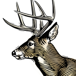 scratchboard animals whitetail deer