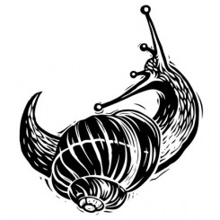 scratchboard animals snail