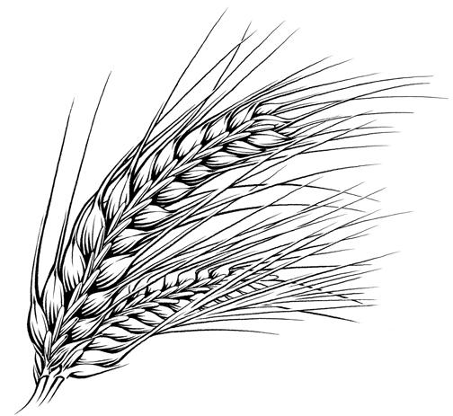 Pen & Ink Illustrations- Food & Beverage - KeithWitmer.com