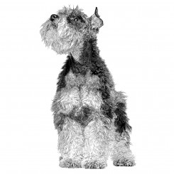 pen and ink animals dog portrait