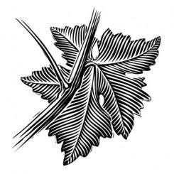 Scratchboard Motley Grape Leaf