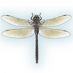 stipple animals dragonfly
